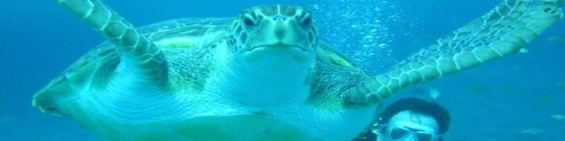 Turtle Tenerife