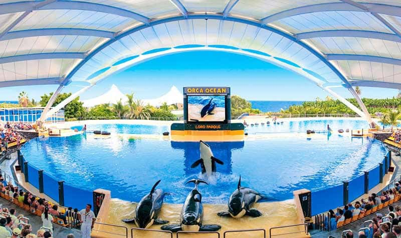 Loro Parque - tourist attraction Tenerife