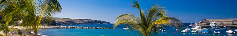 Palm trees at Playa San Juan