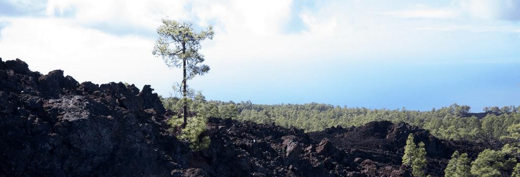 Tenerife Lava